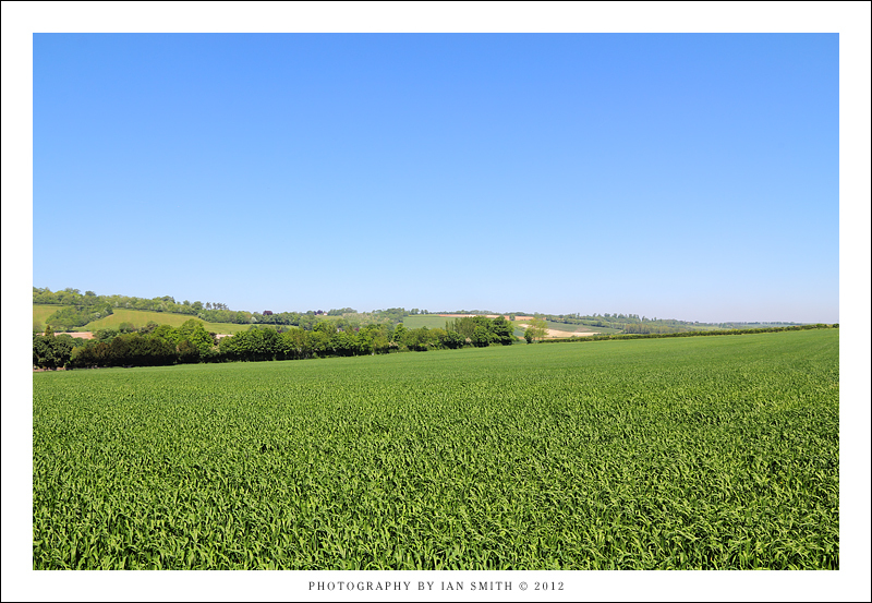 Field in the Darent Valley, Kent