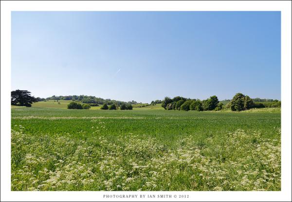 Green fields of Lullingstone, Kent