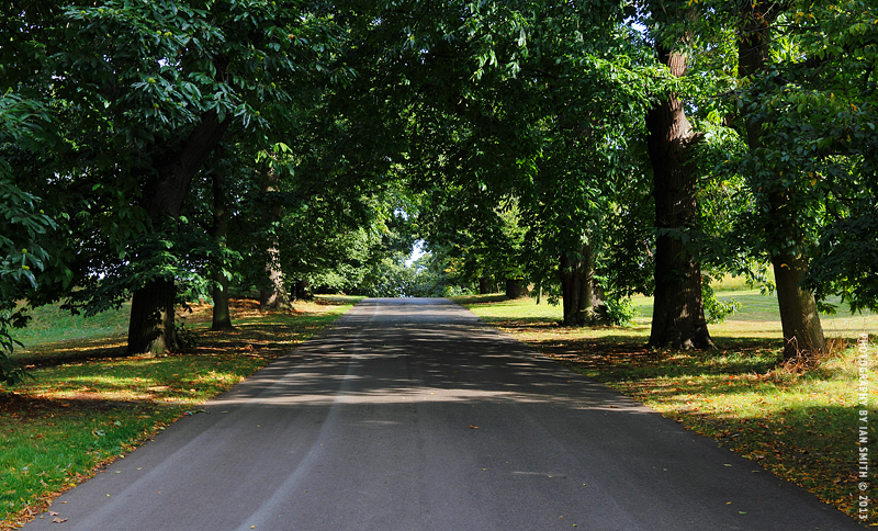 An empty road in Greenwich Park