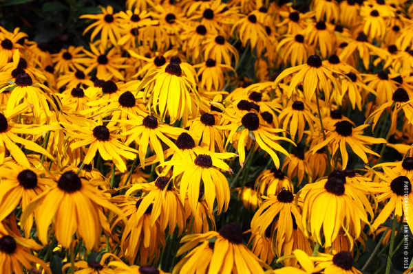 Yellow flowers in the autumn sun