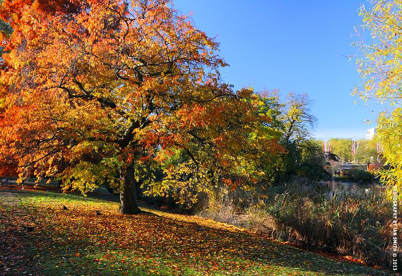 Autumn tree in St James
