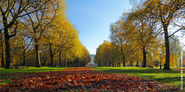 River of red leaves in Green Park
