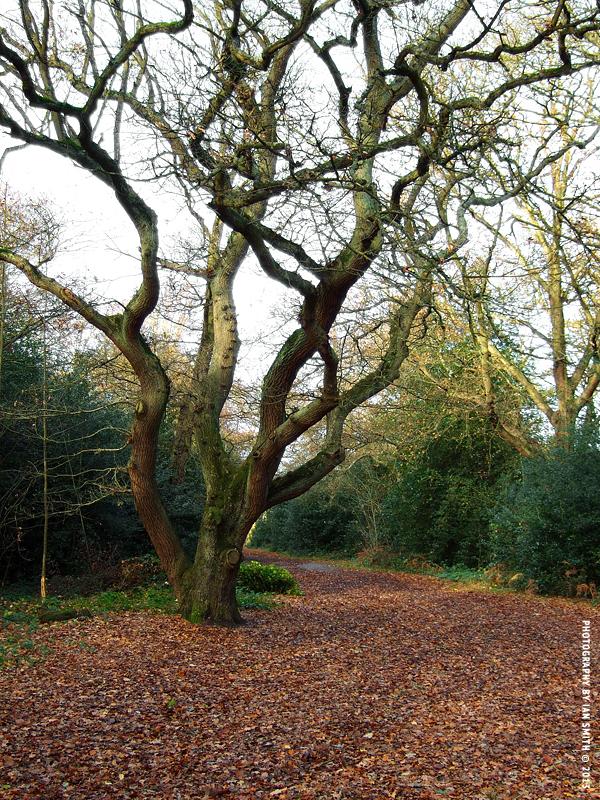 Family tree in Chislehurst