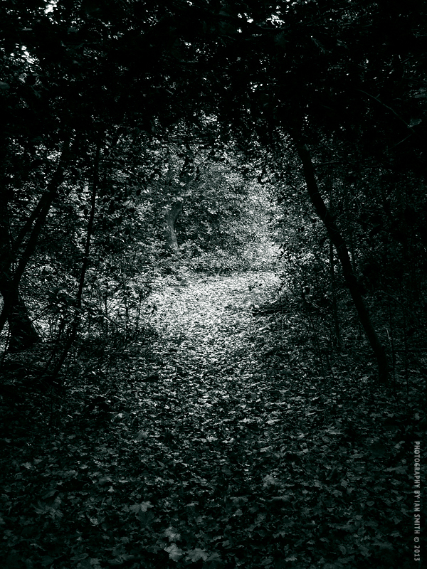 Tree Tunnel in Chislehurst