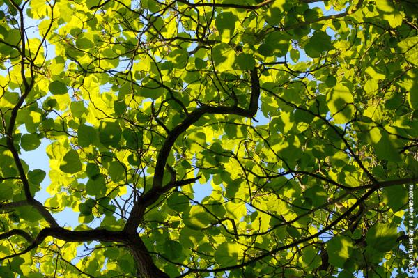 Summer in Kew Gardens