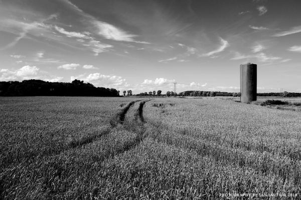 Wheat Fields in Norfolk