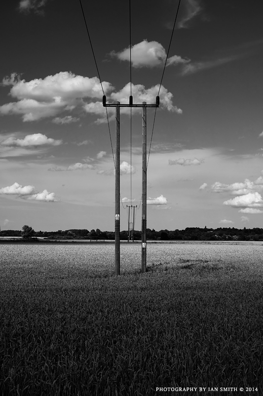 Between Poles in a Norfolk Field