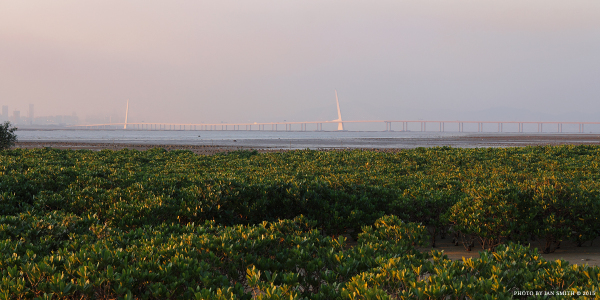 Shenzhen Bay Bridge from Pak Nai, Hong Kong