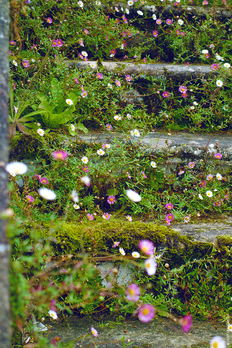 Flowered stone steps outside Sizergh Castle