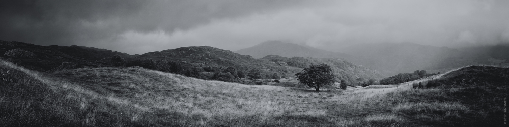A lone tree in the Cumbrian mountains