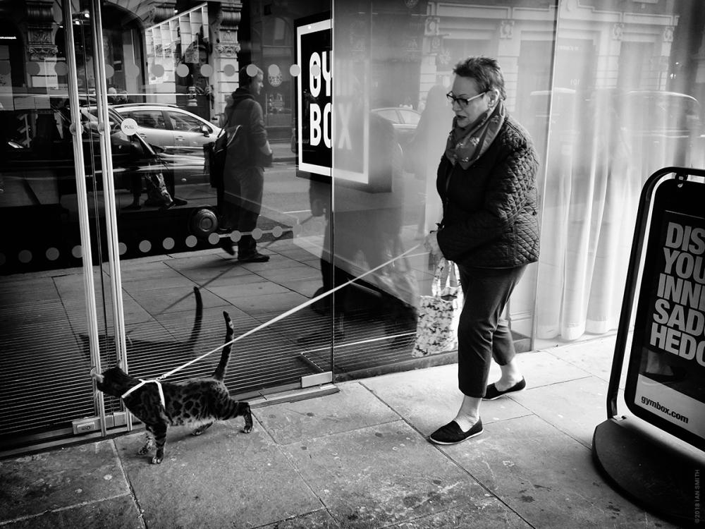 Woman walking her cat in London