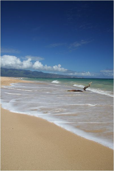Beach scene from Hawaii