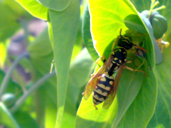 The Wasp 2#