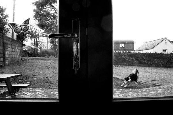 ireland, dog, window, fun