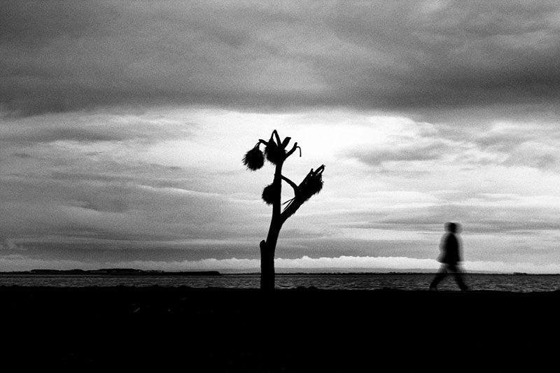 galway, beach, walk, tree, blur