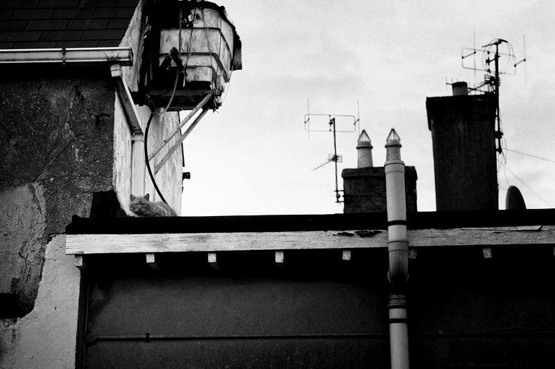 passage east, ireland, cat, roof