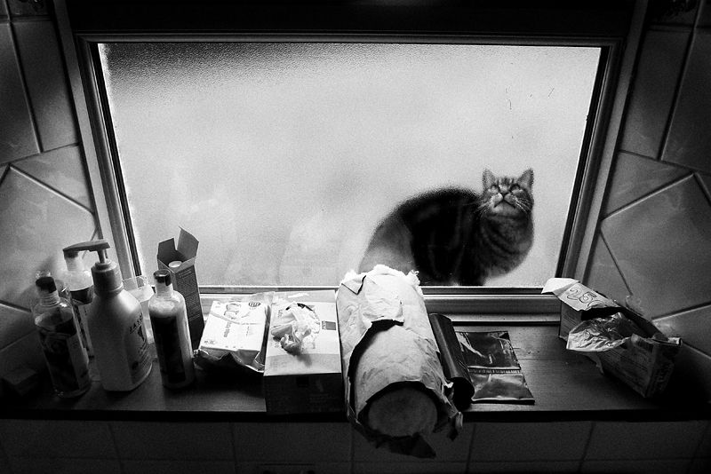 cat, window, ireland