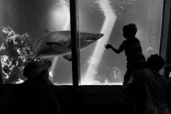 shark, aqarium, kid, ireland, dingle