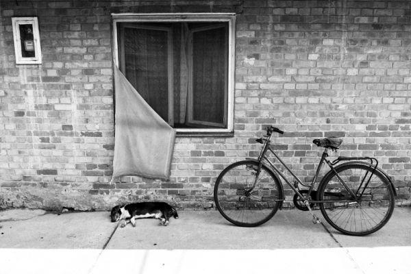 martonos, serbia, dog, bike, wall