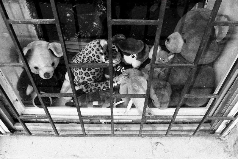 szeged, hungary, teddy, toy, animal, shopwindow