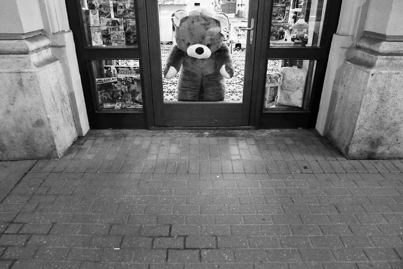 teddy, bear, budapest, hungary, toy, shopwindow