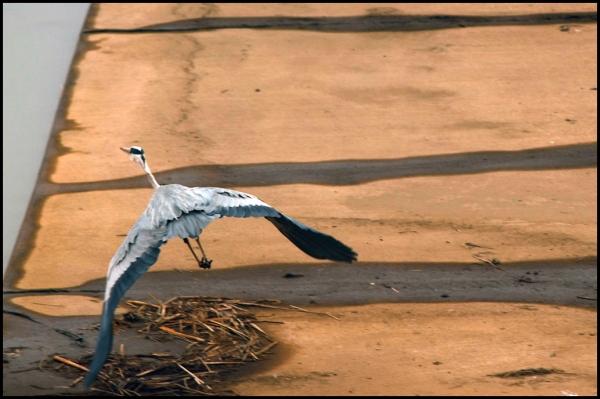 soft focus crane