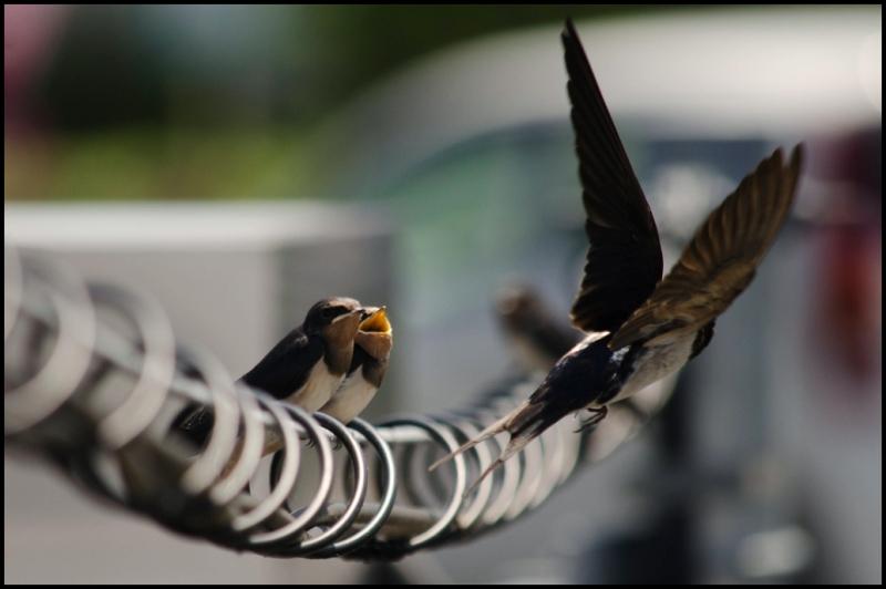 Birds & Wires