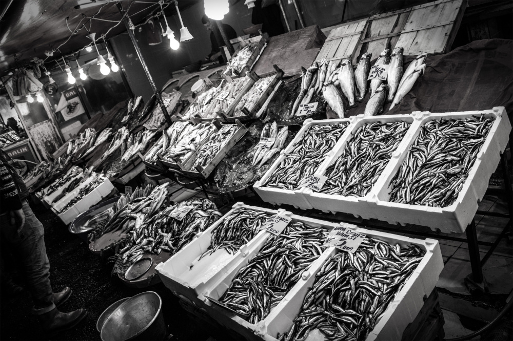 fish in istanbul