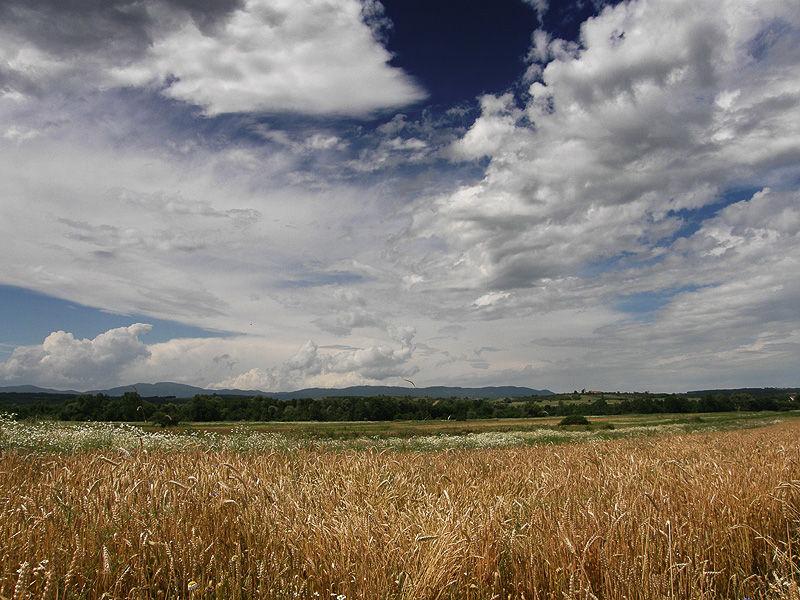serbian field