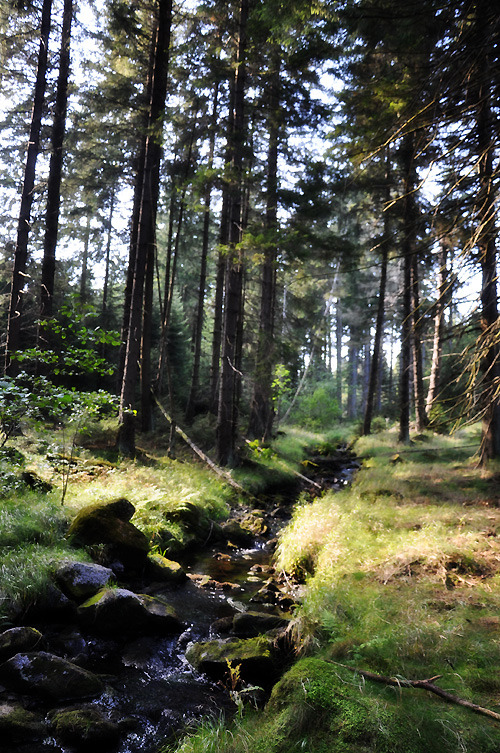in the woods in Harz mountains