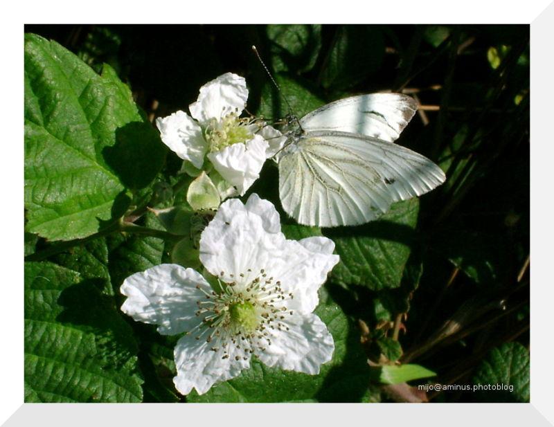 Le mariage de la fleur et du papillon