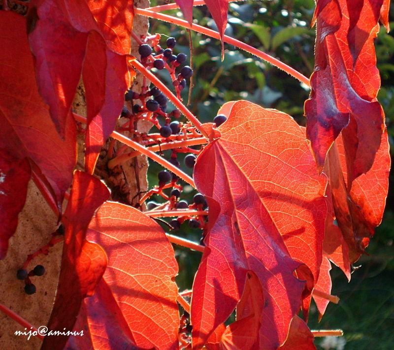 La feuille d'automne emportée par le vent...