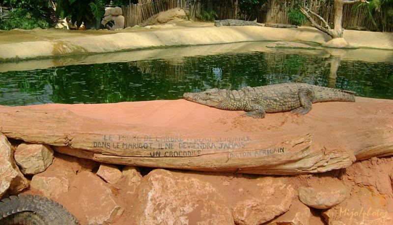 Crocodile Dundee - 3