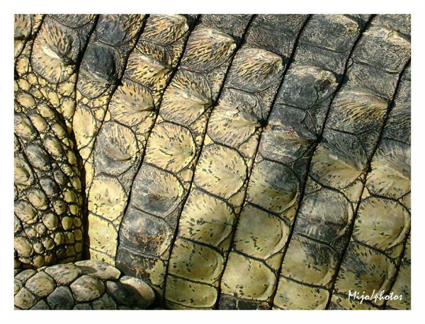 Crocodile Dundee - 5 : en détail
