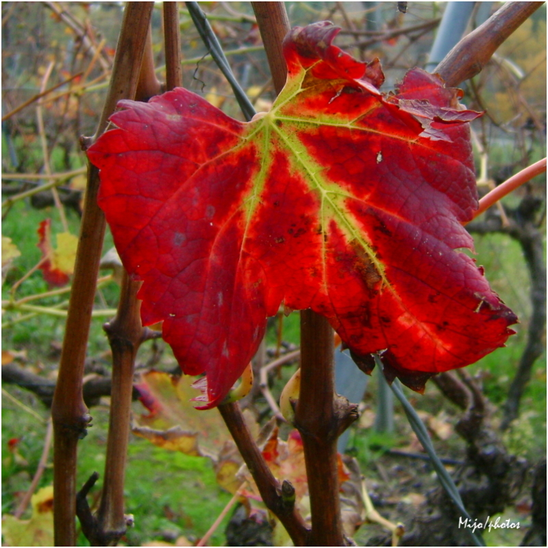 La feuille d'automne, emportée par le vent...