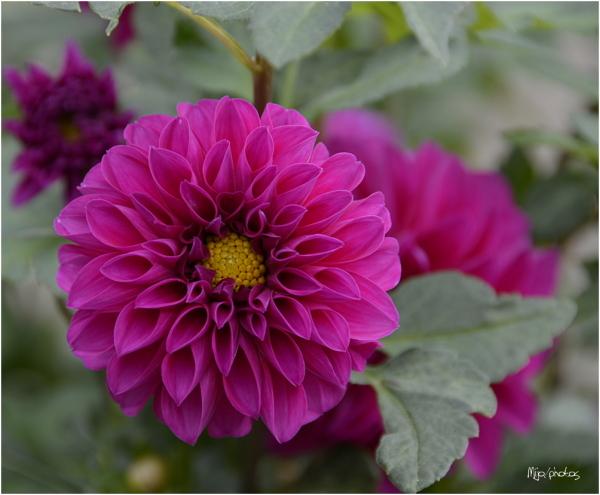 Octobre rose /2
