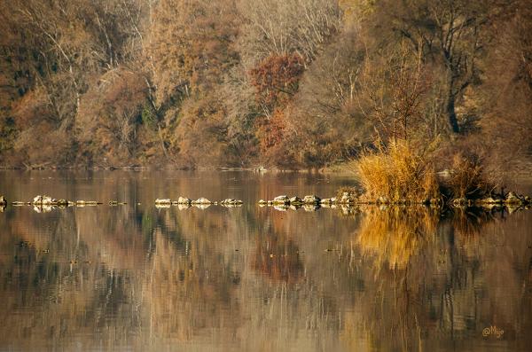 Les dernières couleurs d'automne