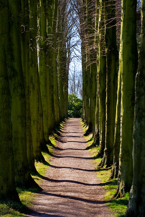 lime tree avenue at Wentworth castle