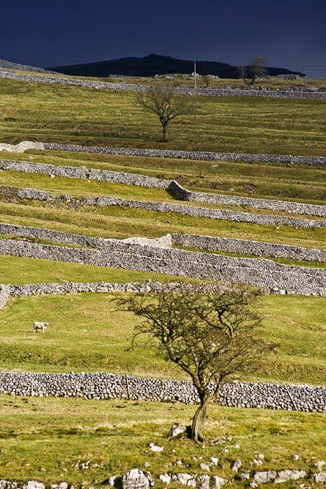 dry stone walls by Malham Cove