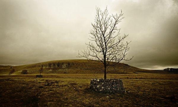 fortress tree