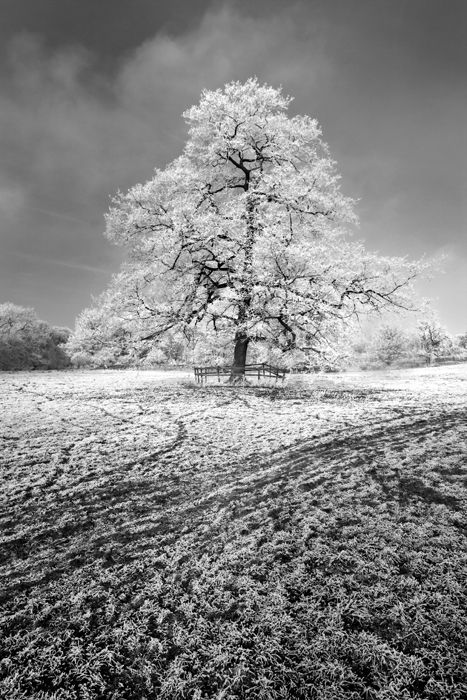 winter in Tadcaster 6