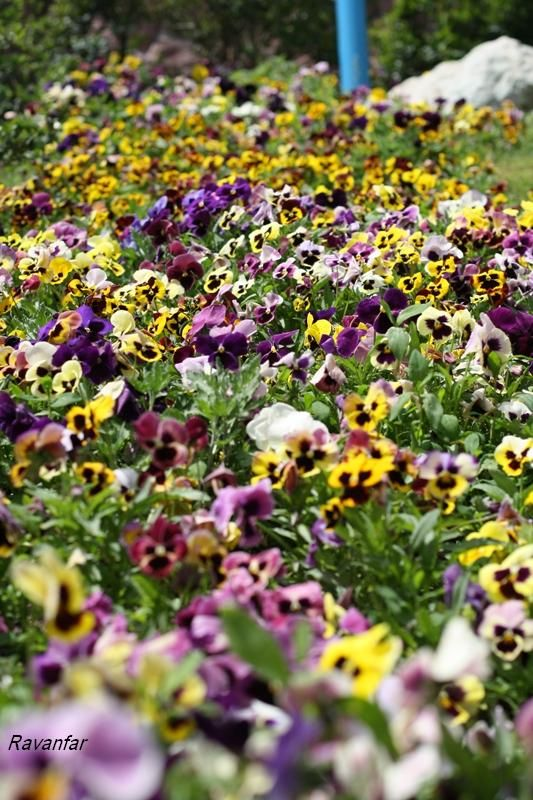 In exhibition - happy flowers     <:-)