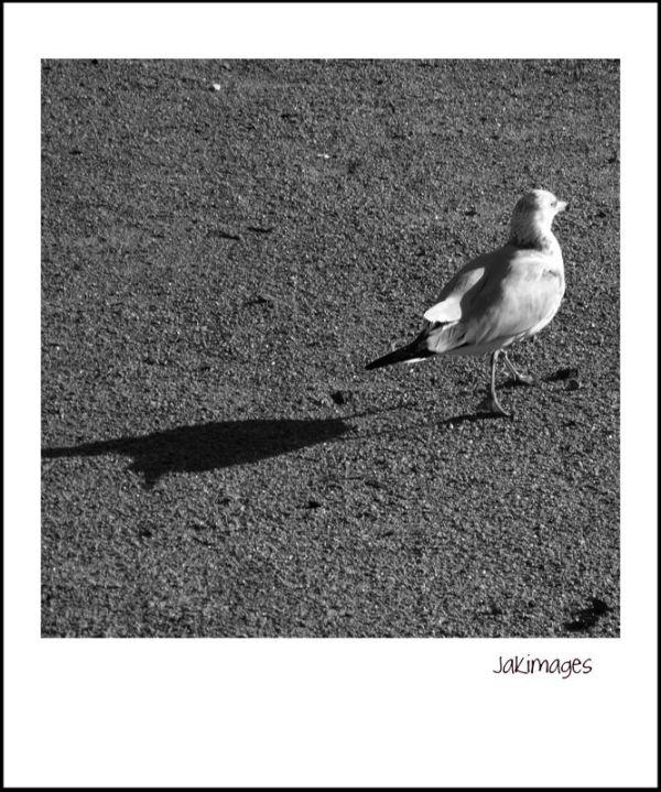 promeneur solitaire
