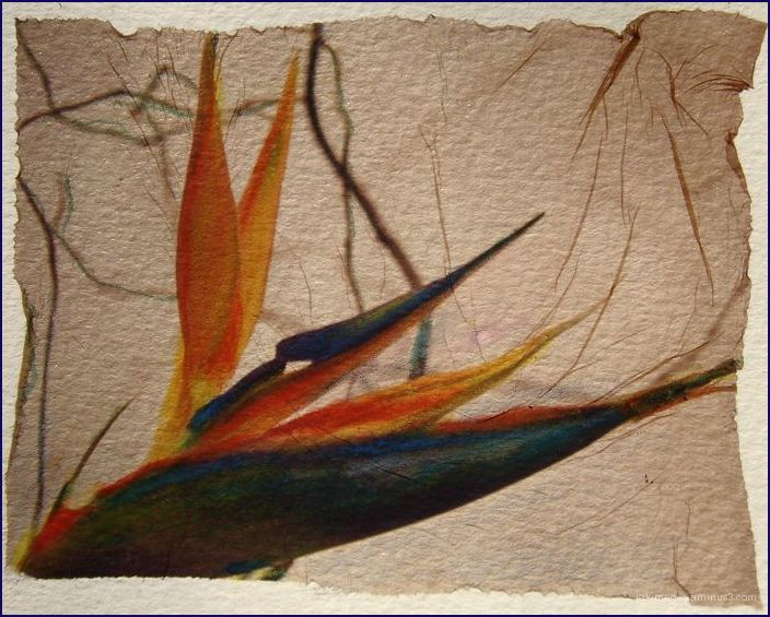 Oiseau du paradis - polaroid transfert