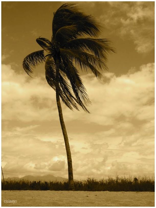 Coup de vent dans les palmes