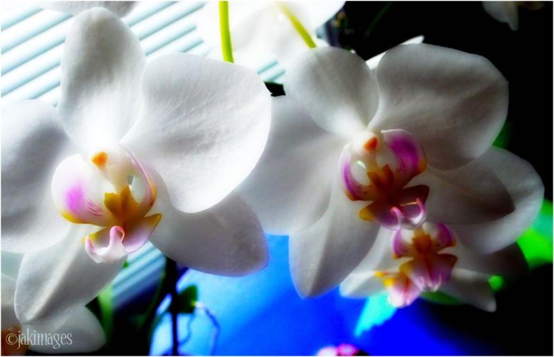 une fleur pour le printemps