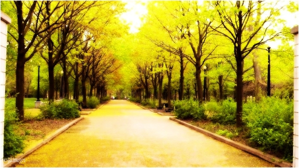 Parc Lafontaine dimanche pluvieux