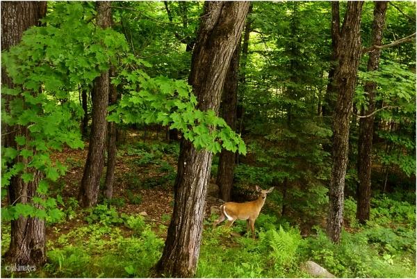 Petite visite dans notre sous bois
