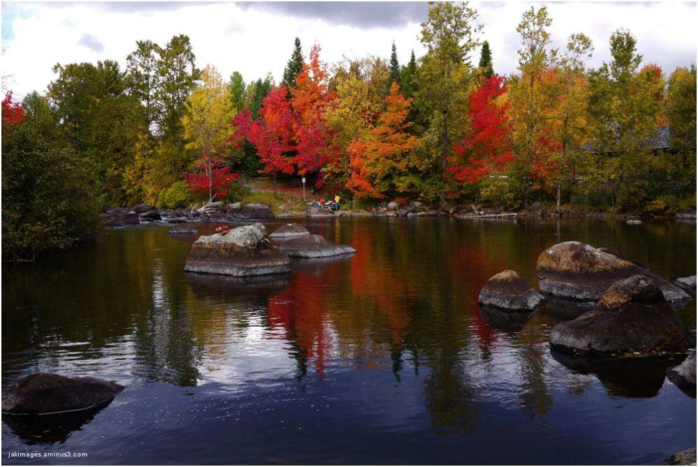 Les couleurs dans les Laurentides ( Québec)