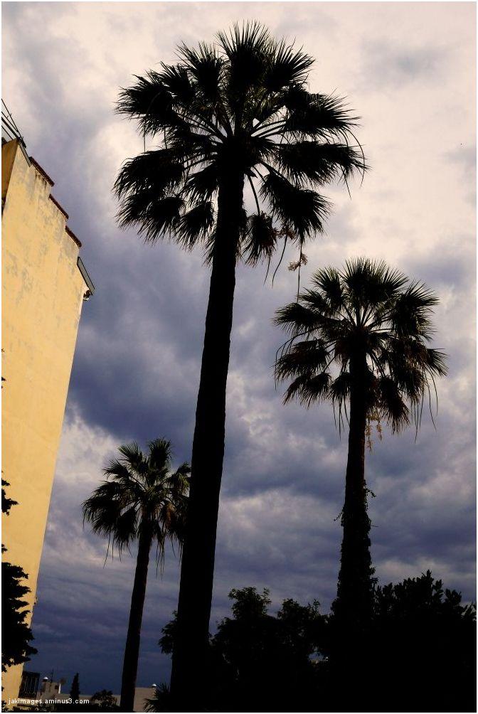 les 3 palmiers
